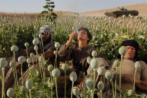 afghan-opium_war1.jpg