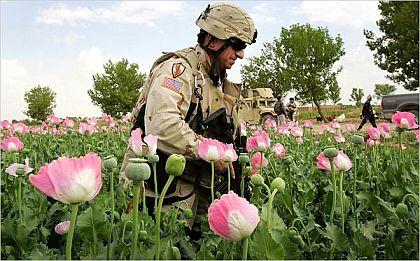 opium567.jpg